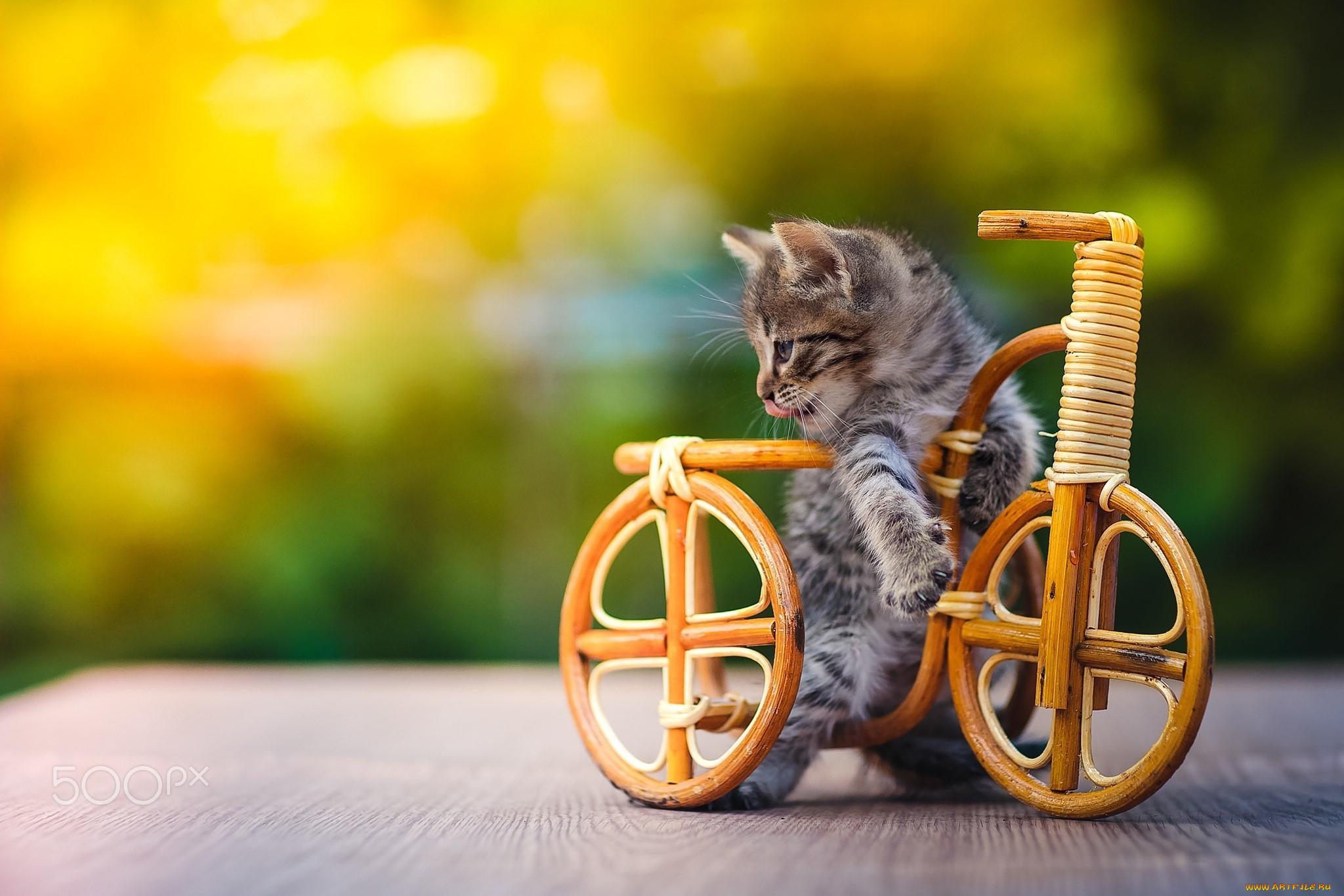 тем менее, картинки котенок на велосипеде вниманию